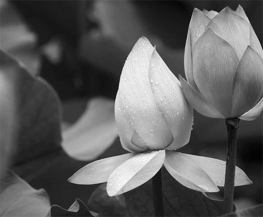 lotus_mood_01